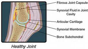 healthy-joint-2